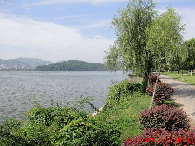 湖边绿树,风中婆娑